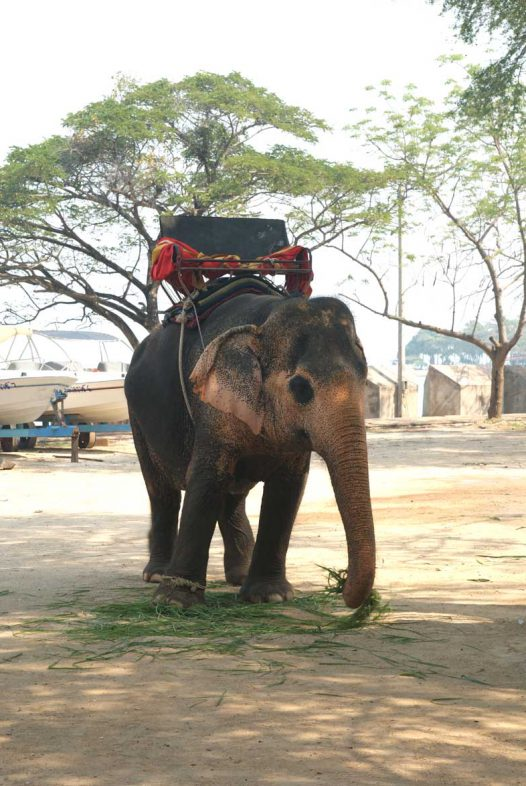 Слон на территории Храма Истины