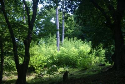Батуми, Ботанический сад